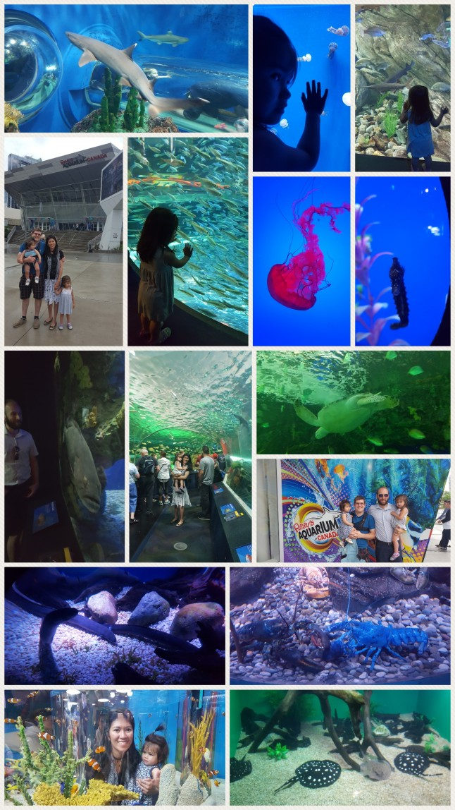 A visit to Ripley's Aquarium.
