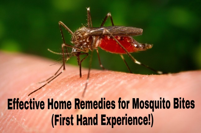 effective-home-remedies-mosquito-bites